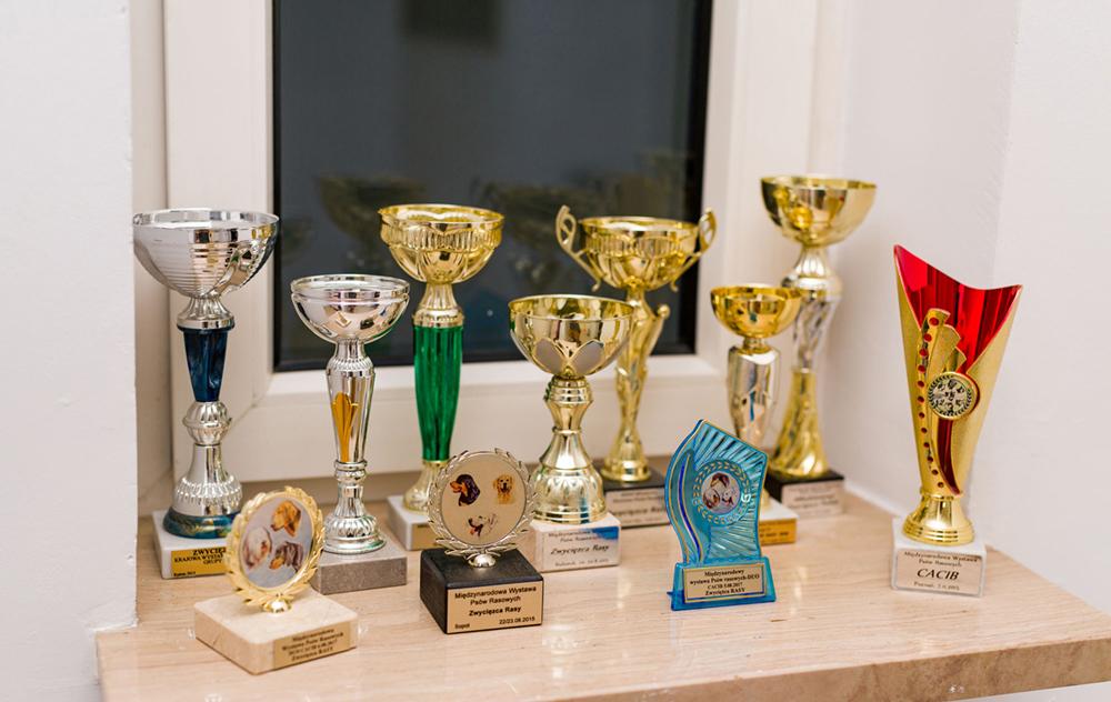 Nagrody Młodzieżowego Championa Polski,Młodzieżowym Zwycięzcą Polski i wiele innych